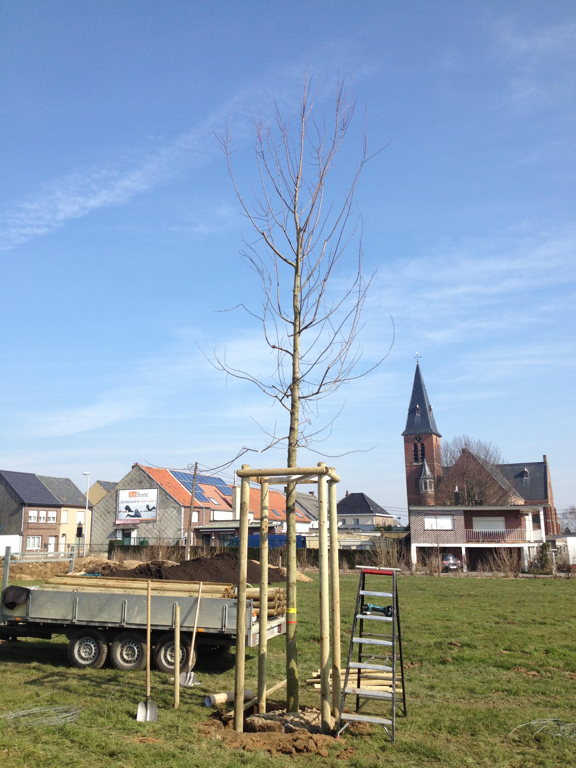 aanplanten van bomen